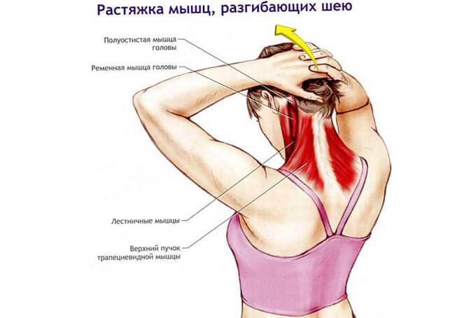 Растяжка мышц, разгибающих шею