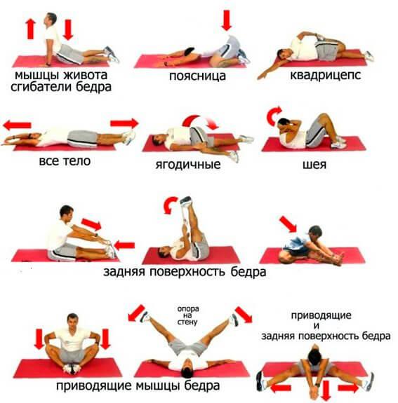 упражнения на растяжку различных групп мышц