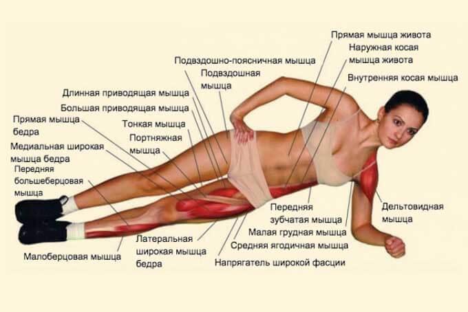 работа мышц в боковой планке