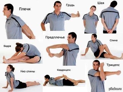 упражнения для растяжки мышц после силовой тренировки