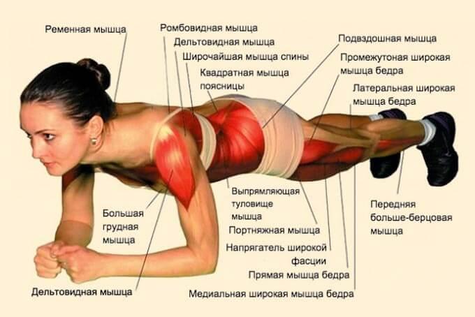 работа мышц в планке